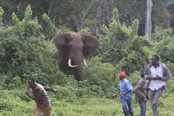 Elephant causes chaos in Meru
