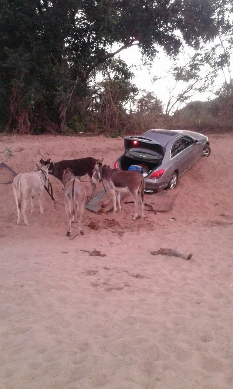 Meet South Africa's syndicate using donkeys to smuggle luxurious cars into the country