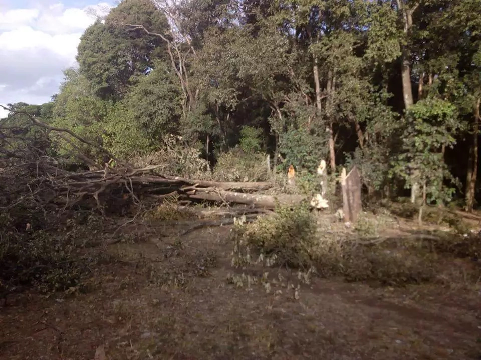 Company in trouble for cutting trees