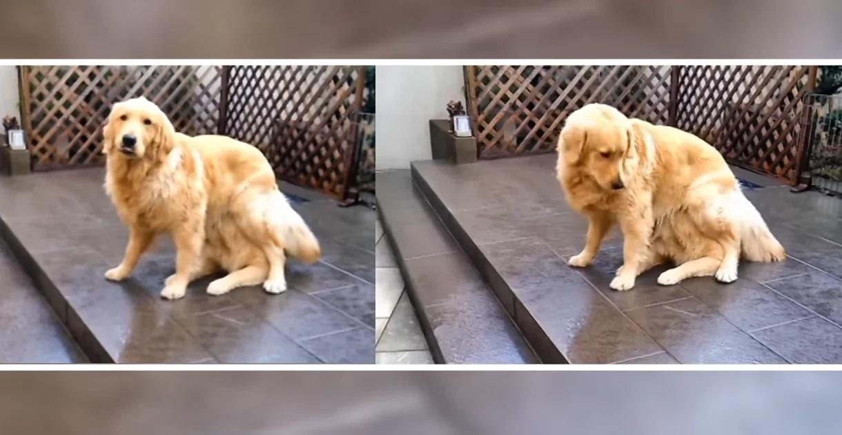 Este perro no es lo que parece y lo que está por hacer te dejará sin palabras