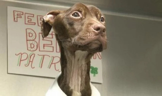 They Found This Abandoned Puppy Moments Before Death. But His Story Is Just Getting Started.