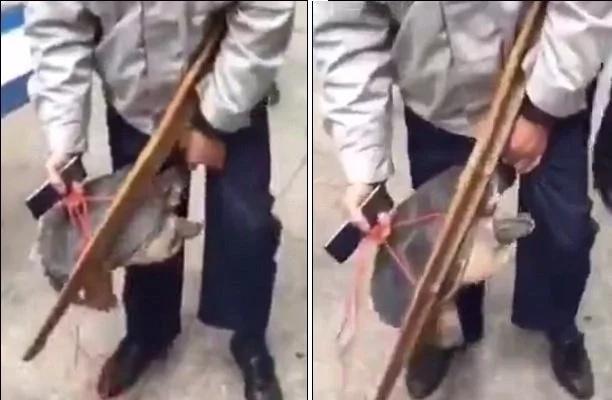 Tortuga mordió los genitales de este pobre hombre