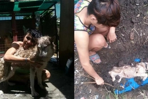 Famous adopted 'zombie dog' with amazing transformation passed away