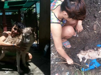 Brei the adopted 'zombie dog' passed away