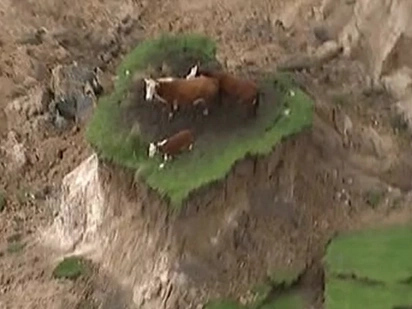 Hindi pa namin panahon mga bes! Farmer rescues 3 stranded cows that survived NZ 7.8 magnitude quake