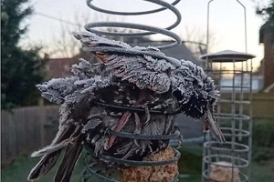 'Torture Chamber' Birdfeeder Petrifies Toddler After Bird Freezes To Death Inside
