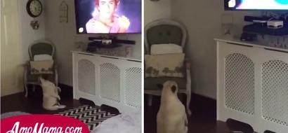 Estaba jugando con su perro pero de pronto el animal comenzo a actuar de una manera aterradora