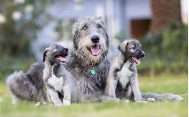 Conoce a los cachorros gemelos más adorables del mundo