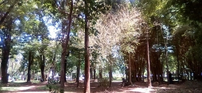 Muliro Gardens in Kakamega and Other Sights in Kakamega County