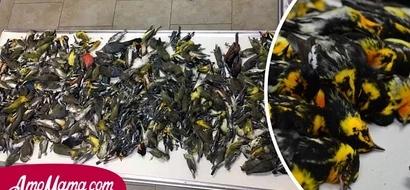 Los policías se sorprendieron de encontrar a casi cuatrocientos pájaros muertos en el suelo, asesinados por una razón muy estúpida