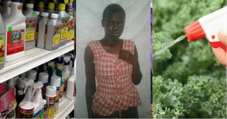 Wickedness! House-help feeds her employer with pesticide for a week to test how it works