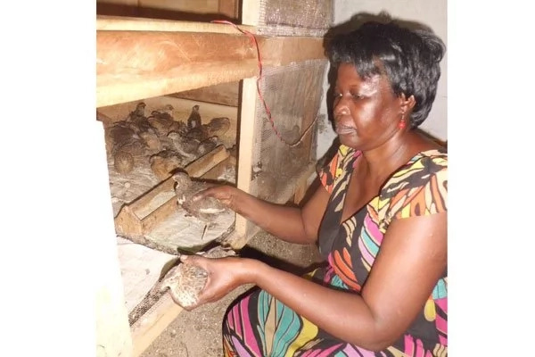Forget about Kenya's quail farmer story! Ugandan woman discovers goldmine in quail eggs