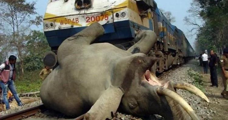 3 elefantes atropellados por tren de pasajeros en Bengala Occidental