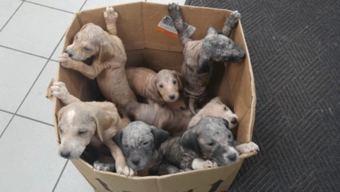 A Box Full Of Puppies Abandoned On A Busy Highway Hang On To Life