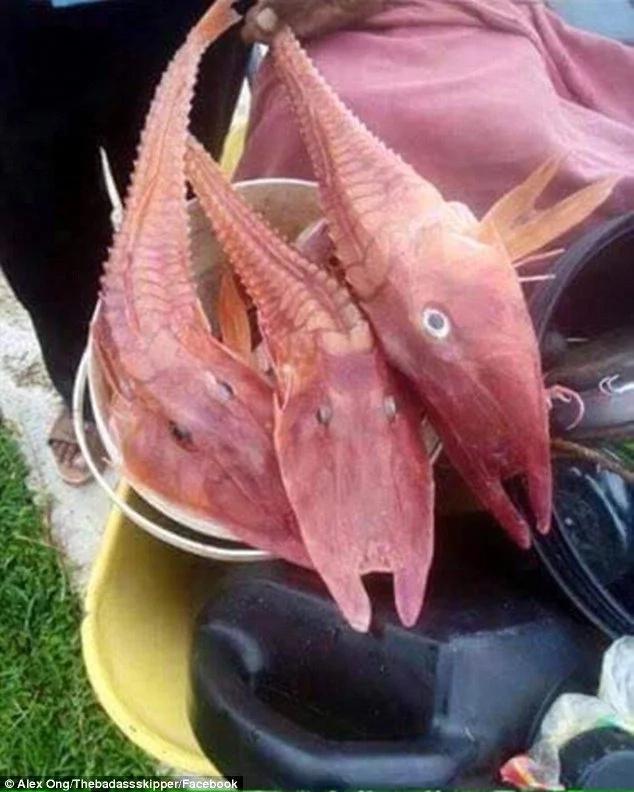 Fishermen catch freaky looking fish