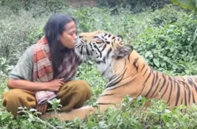 This courageous man is called the 'Tiger Nanny.' He spends his day eating, playing, relaxing & caring for a 400-lb tiger