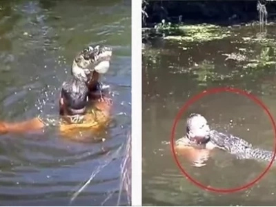 Tourist were surprised when their tour guide jumped into the water and feed the alligators through his mouth