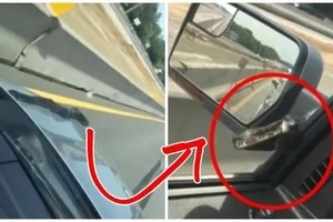 Looks scary! Netizen films a snake crawling his car while driving. Finally, the reptile attempts to get inside through the open window