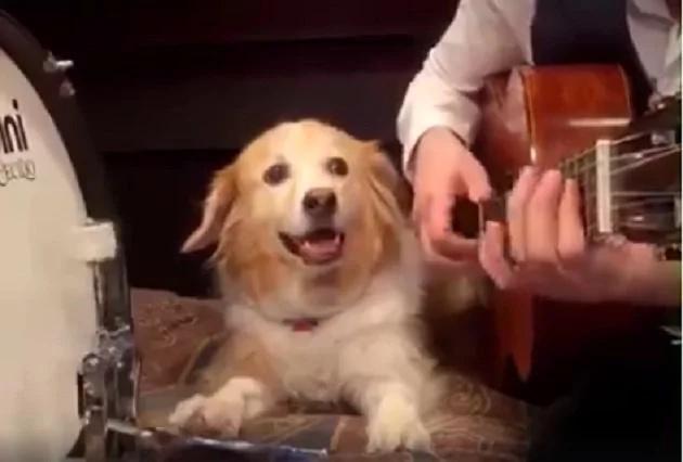 Este perro toca el bombo como los dioses