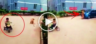 This brave dog saw a car moving towards the direction of a child riding a bike. You won't believe what the animal does next!