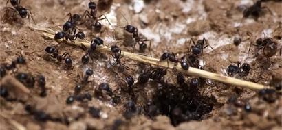 Esta boliviana hizo un robo y como castigo la ataron a un árbol plagado de hormigas. La mujer murió. No es justo