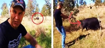 This curious guy confronted a wild boar. The animal displayed strange behavior during their intense encounter!