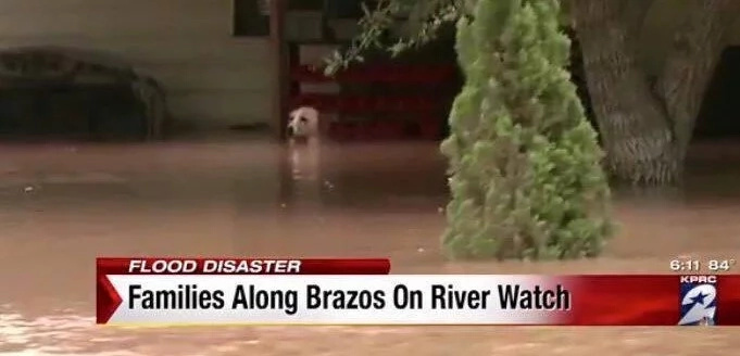 This poor dog was tied to porch neck deep in flood water