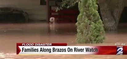 Watch how this poor dog was rescued from a drowning death