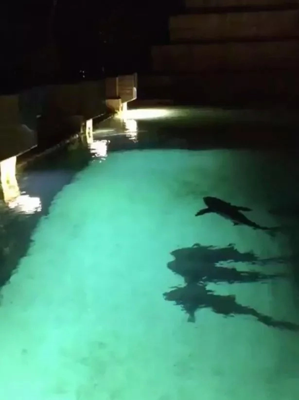 See what happens when daredevil boy jumps into tank full of SHARKS (photos, video)