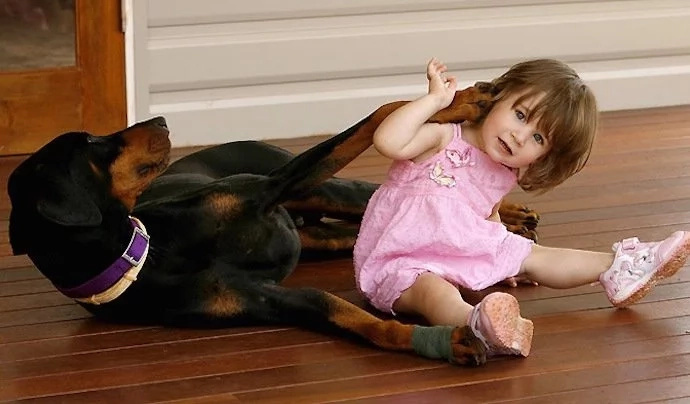 Suddenly a dog grabs a little girl and pulls to the side. Then the family sees why…