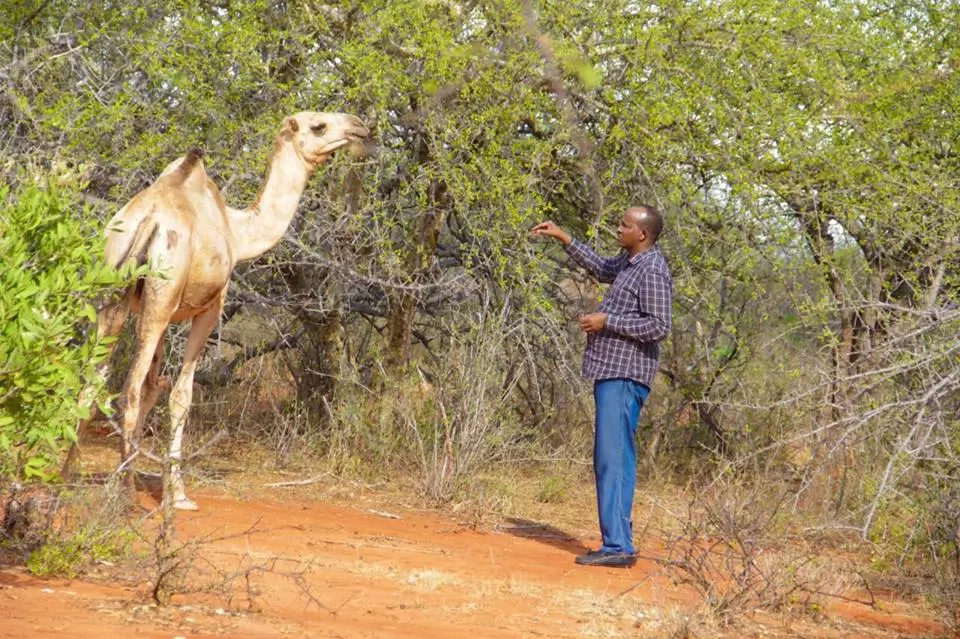 Aden Duale in Garissa at his camel farm