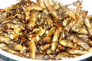 You wouldn't believe that Pinoys actually eat these 5 nasty dishes!