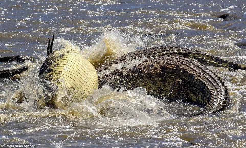 The river was full of crocodiles