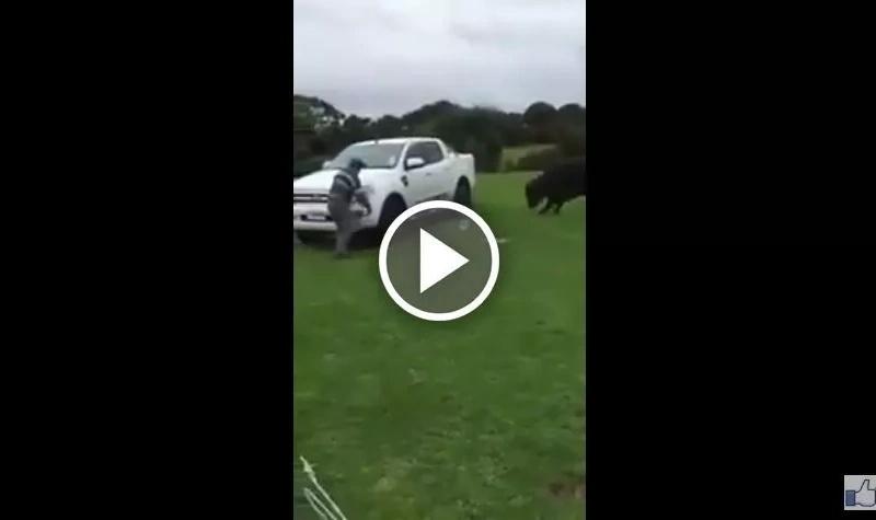 Este hombre se enfrentó a un toro furioso para evitar un ataque