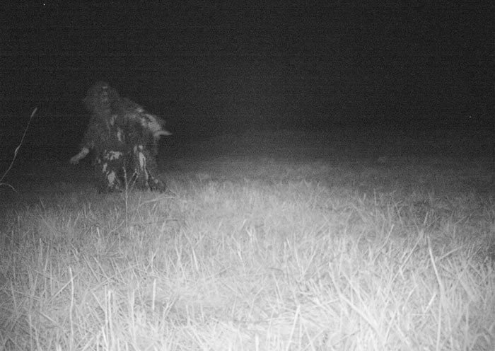 Police camera finds a host of strange creatures at national park