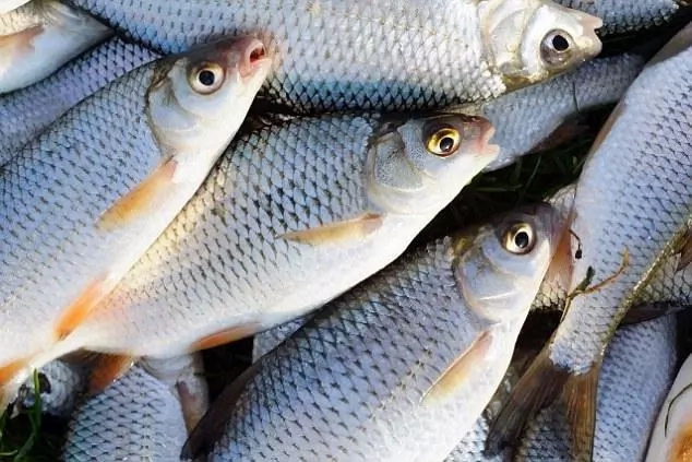 Stop! Contraceptives and cleaning products flushed down toilets turning male fish into transgender – Experts