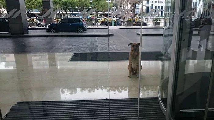 Read why this stray dog would wait outside a hotel
