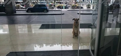 This stray would wait outside her hotel for months! Read what happened next!