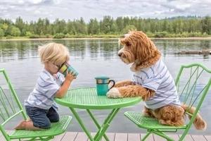 Niño intenta vender su juguete favorito para salvar perrito