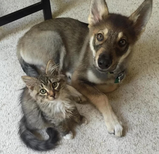 Le couple a adopté ce chiot venant d'un refuge, mais l'y a ensuite ramené... voilà pourquoi