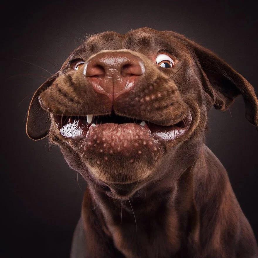 Graciosísimas caras de perros tratando de atrapar una galleta