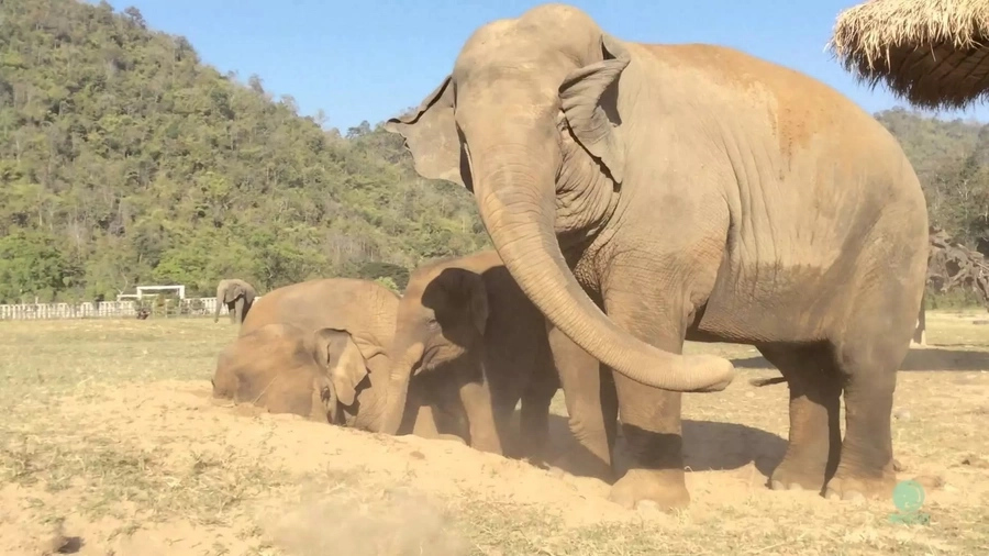 Elephant Accidentally Farts In Public, And That Was The VERY Beginning Of The Story