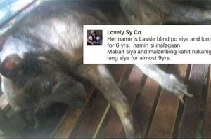 Netizen shares touching photo of her bed-ridden dog who stays 'malabing' despite being blind and crippled for almost 9 years