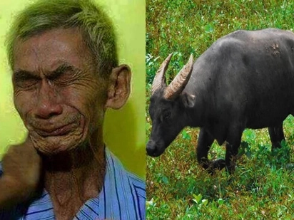 Poor old farmer mourns for his carabao after thieves did this terrible thing for him