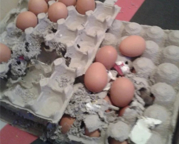 Woman bought eggs which were infested with RATS (photos)
