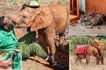 Gladdening! Orphaned elephant kisses man who saved her from her aggressors