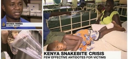 Kenya hit by deadly SNAKEBITE crisis as anti-venom runs out (photos)