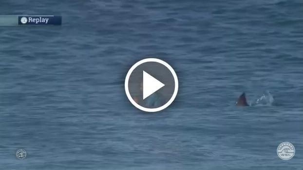 ¡Terrible! Mira el momento en que un tiburón ataca a este surfista