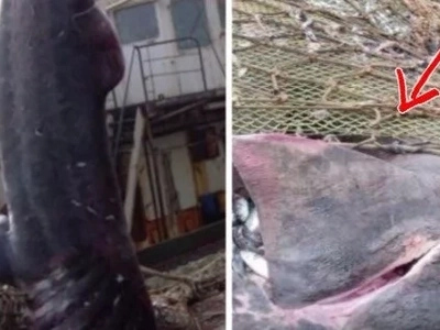 Fishermen were catching fish and enjoying their cozy lives. Then they spotted something big and pinkish in their fishing net! (video)