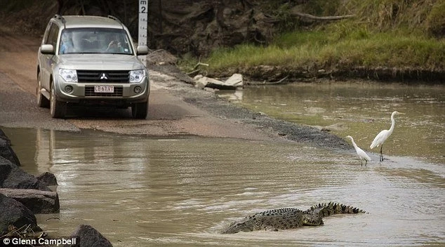 Man killed by crocodile at Cahills Crossing in Northern Territory